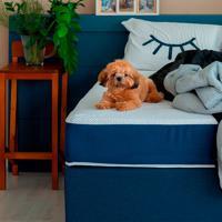 Cama Box Click Solteiro King Com Colchão Guldi Firme (39X96X203) Azul