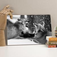Placa Decorativa - Fox Love