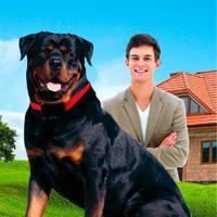 Coleira De Adestramento Sit Plus Deal Para Adestrar Seu Cão De Pequ.