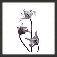 Quadro Decorativo Com Moldura Rosas Preto