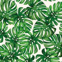 Papel De Parede Costela De Adão Verde E Branco (1000X52)