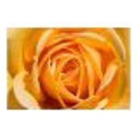 Painel Adesivo De Parede - Rosa Amarela - Flores - 1209Png