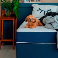 Cama Box Click Solteiro Com Colchão E Travesseiro Guldi Macio (39X88X188) Azul