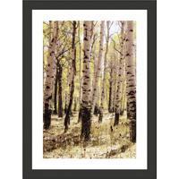 Quadro Decorativo Com Moldura Floresta I Preto