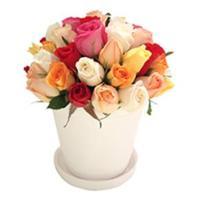 Flores em Vasos